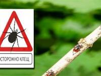 В Крыму будет работать «горячая линия» по профилактике «клещевых» инфекций!