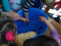 """В детском саду прошло открытое занятие в младшей группе """"На берегу моря"""""""